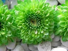 Amazing Green Flowers wallpaper ...