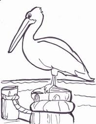Small Picture pelican bird coloring pages 2014 2015 Pinterest Pelican bird