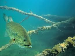 Free download fish r bass fishing ...