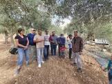 טיפה בים של אלימות: המתנדבים הישראלים בעונת המסיק בגדה