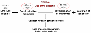 the evolutionary theory of aging and life history theory evolution of mam an aging