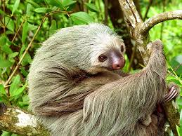 Since its introduction in the late 1700's, coffee has formed the backbone of costa rica's economy. Costa Rica Pura Vida Friendly Planet Travel
