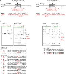Generation Of Gene Edited Rats By Delivery Of Crisprcas9 Protein