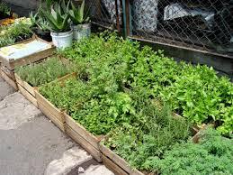how to grow a herb garden. SHNS_YardSmart06_04_07a How To Grow A Herb Garden