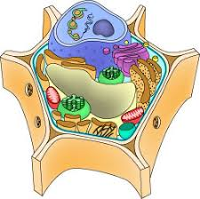 Small Picture Parts of a cell ASU Ask A Biologist