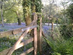 view from the woods towards the bluebell meadow book for next year may is