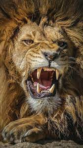 Angry Lion Wallpaper - KoLPaPer ...