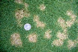 Dealing With Dollar Spot A Fit Turf Guide