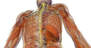 Reflexology Chart Vagus Nerve 12 Ways To Unlock The Powers Of The Vagus Nerve