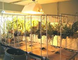 Basement Grow Room Design Impressive Basement Grow Room Building A Grow Room In Basement Home Build
