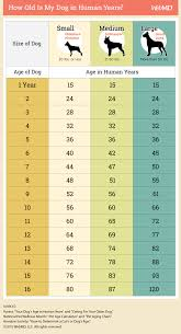 Dog To Human Years Conversion Chart Dog Age Chart How To Convert Your Dogs Age Into Human Years