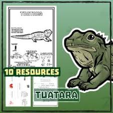 Small Picture Tuatara Animal Coloring Pages Tuatara 10 Resources Coloring