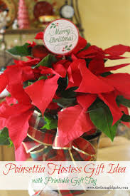 poinsettia hostess gift idea with a free printable gift poinsettias make perfect gifts for