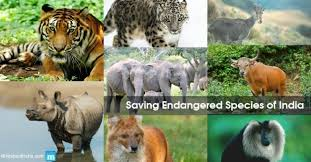 Endangered Animal Species Of India Causes Reasons And