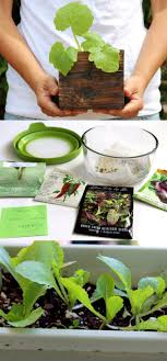 How To Germinate Flower Seeds Paper Towel Germinating Seeds 3x Faster Best Fail Proof Way To Start Seeds