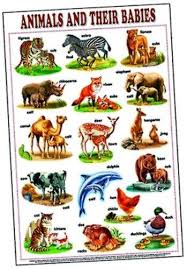 Educational Charts Animals Their Babies