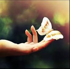 Risultati immagini per farfalla in volo immagini
