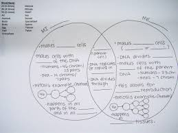 Meiosis Mitosis Worksheet - wiildcreative