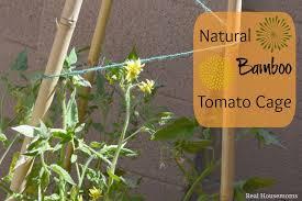 diy natural bamboo tomato cage