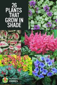 gorgeous shade tolerant plants that will bring your shaded garden areas to life best shrubs ideas