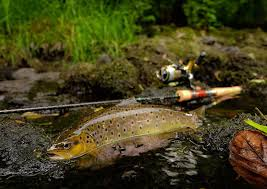 Which Is The Best Hook Size For Trout Fishing