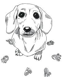 Dachshund Coloring Page Dachshund Printable Coloring Pages