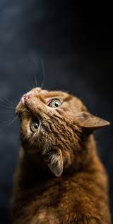 Cute Cat Wallpapers HD For Mobile Phone ...