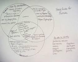 Bacteria Animal And Plant Cell Venn Diagram Protist Venn Diagram Magdalene Project Org