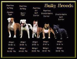 Types Of Pitbulls Chart Just To Clarify The Differences People Lump Them All Into