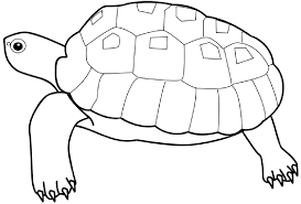 Small Picture Turtle Coloring Page Sea Ocean Animals Coloring Coloring Pages