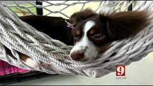 Action 9 Investigates Florida Pet Lemon Law Wftv