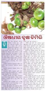 essay on medicinal plant amla  essay on medicinal plant amla