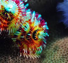 Ocean Life Best Meditative Ocean Animals Interesting Christmas Tree Worm Facts