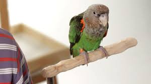 Parrot Diet Chart How To Use Food As A Training Tool Parrot Training