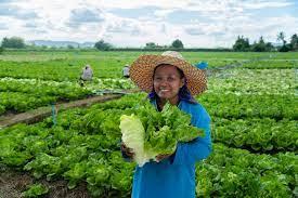 เจียไต๋ แนะปลูกพืชเก็บเกี่ยวไว 1-2 เดือน สร้างรายได้หมุนเวียน  สู้วิกฤตโควิด-19 | เกษตรก้าวไกล