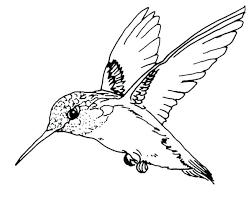 Bird Coloring Pages Printable Bird Coloring Pictures Coloring Pages