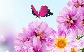 Beautiful Flower Backgrounds #6774979