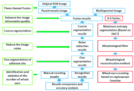 Winter Wheat Growth Stages Chart Flow Chart Of Recognition And Counting Method Of Wheat Ear