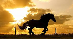 horses running in the sunset. Fine Horses Horse Running At Sunset  Photo By  Throughout Horses Running In The Sunset S
