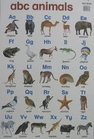 Animal Abc Chart Animal Charts Yellowbear