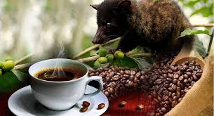 Hasil gambar untuk luwak coffee plantation bali ubud