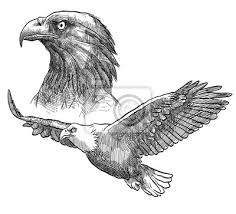 Obraz Sada Tetování Orel