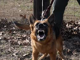 Image result for protection dogs