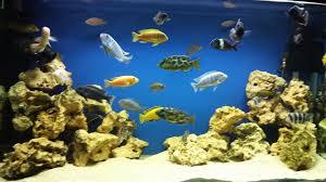 Aquarium Background Pictures Background Colour Aquarium Manufacturers Nd Aquatics Ltd