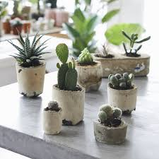 ... Recycled concrete succulent planters ...