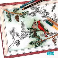 Small Picture Winter Cardinals Christmas Coloring Page for Adults
