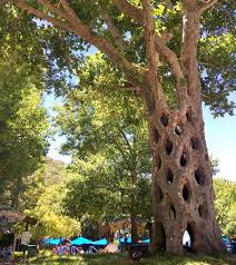 basket tree in gilroy gardens