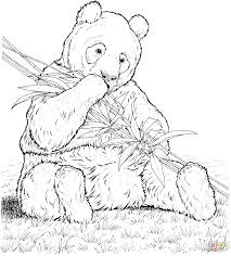 Small Picture Coloring Pages Animals Giant Panda Bear Coloring Pages Panda