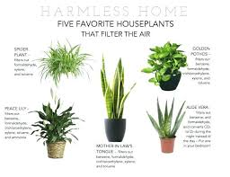 low maintenance office plants. Low Maintenance Plants For Office Articles With Indoor Tag Best .