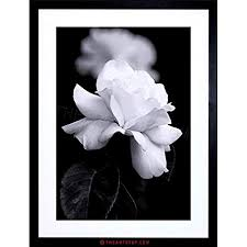 framed black and white prints contemporary framed pictures black white amazon co uk inside in 22  on amazon uk black and white wall art with framed black and white prints incredible floral amazon com
